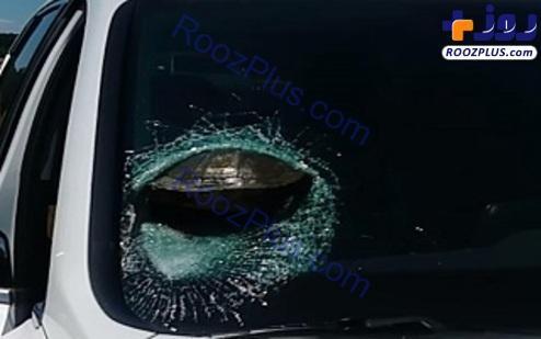 تصادف عجیب یک خودرو با لاک پشت