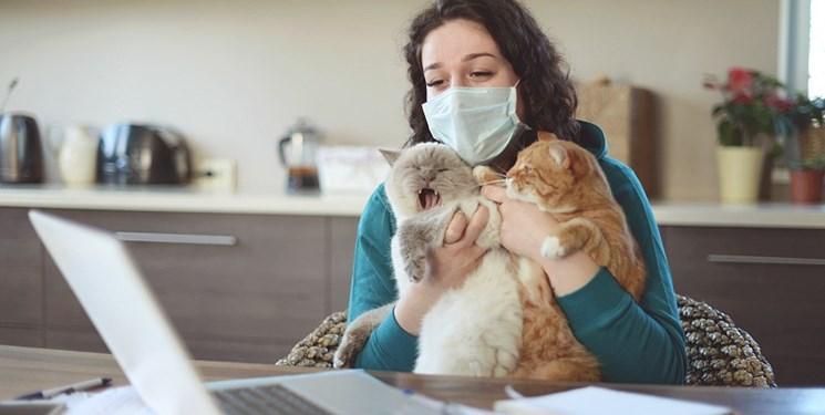 سازمان جهانی بهداشت: حیوانات خانگی ناقل ویروس کرونا نیستند